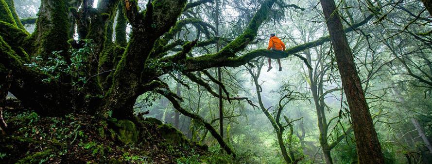 Arbre homme forêt survie