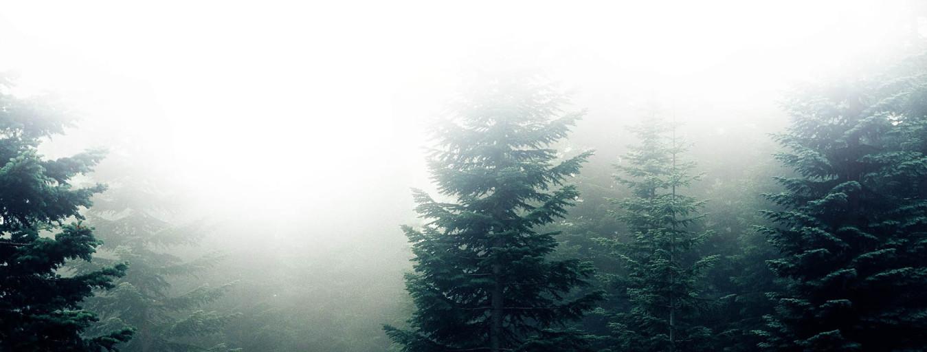 Forêt sapin survie