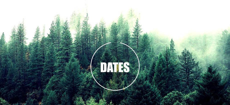 Sapin forêt survie