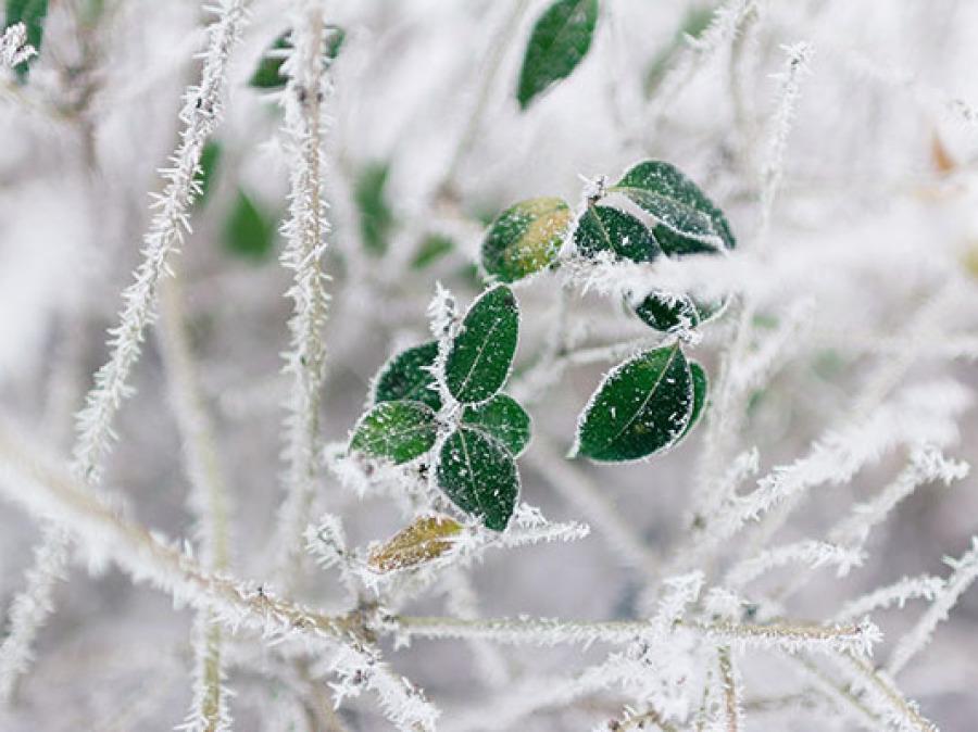 Feuilles neige survie