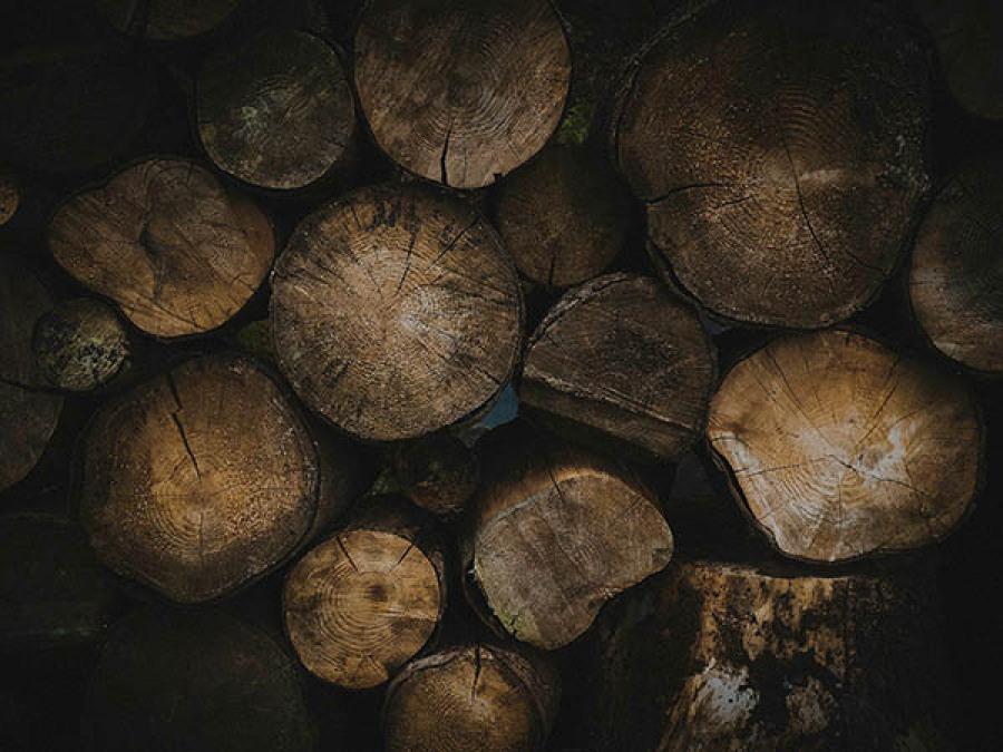 Bois bushcraft survie
