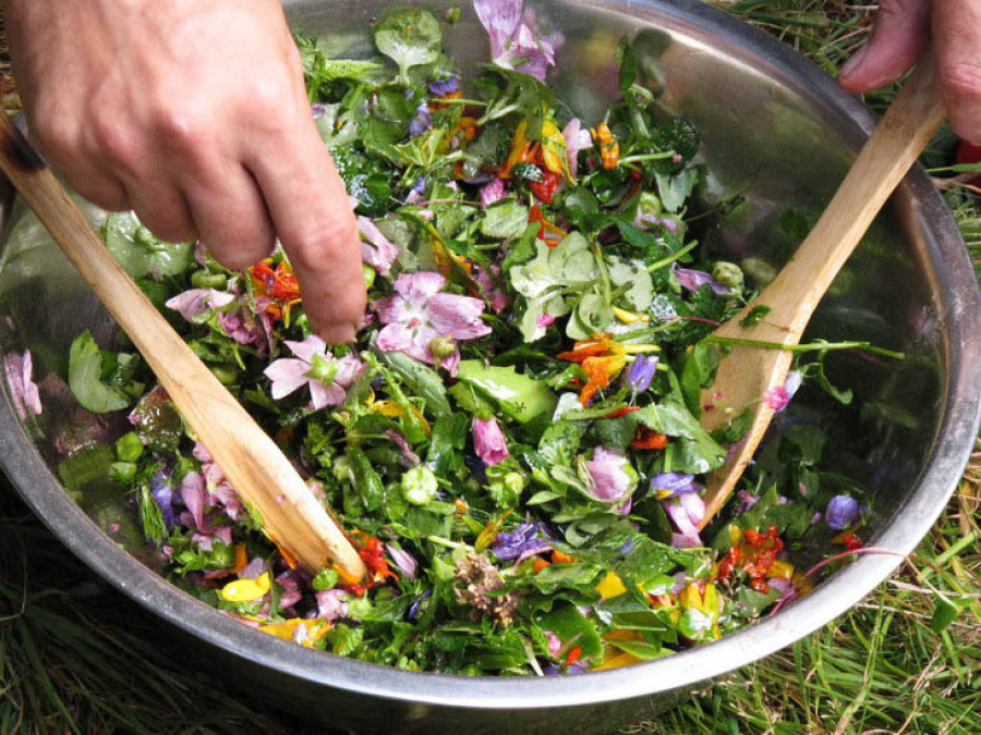 Salade cueillette fleurs plantes