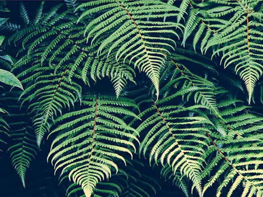 Fougère plante survie