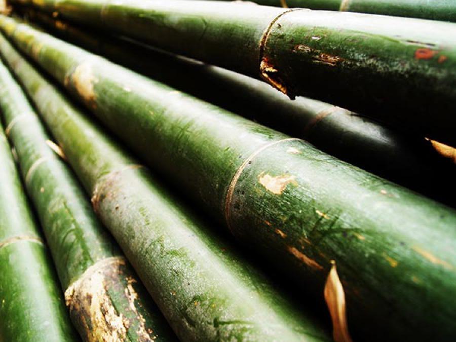 Bamboo survie