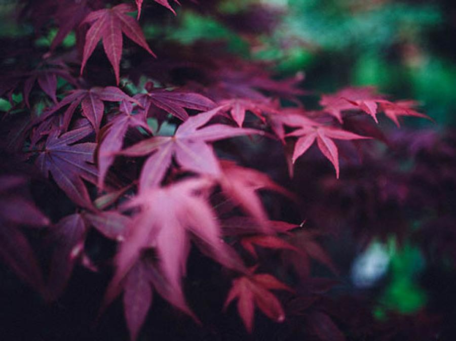 Feuilles automne survie