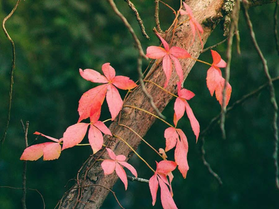 Feuilles arbre survie