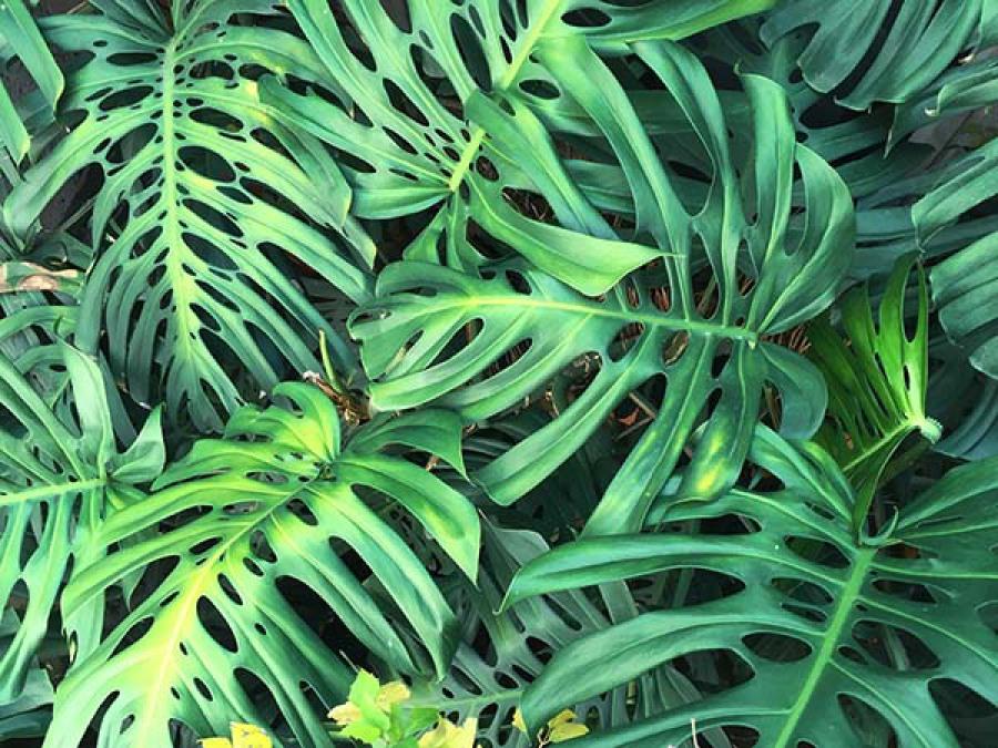 Plante verte survie